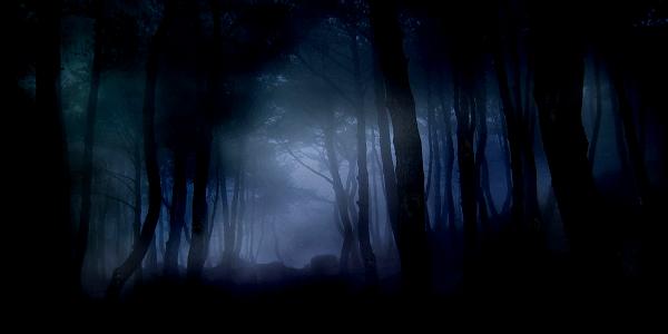 Shadowy_Forest_by_Melurinn
